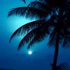 """""""Night Blue""""<br /> _DSC0156aeamador©-DB-C"""