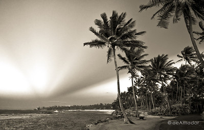 _DSC0188-Edit-bwaeamador©-DorMon2