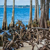 While there was a little man-made beach on this section of Lake Pontchartrain, there was mostly the natural tangle of trees and roots.