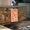 aeamador©-HK08_DSC0003     Saukiwan market. Saukiwan, Hong Kong island. <br /> Live frogs for sale.