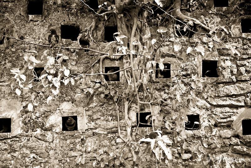 """Pigeon Park""<br /> _DSC0012aeamador©-OSJM1"