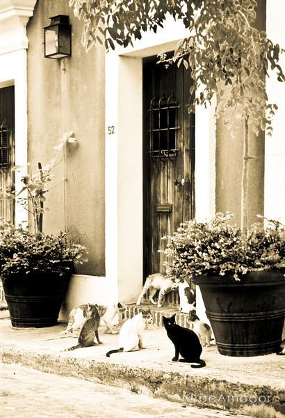 """Cat Alley""<br /> aeamador00537f_3aeamador©-OSJM2"