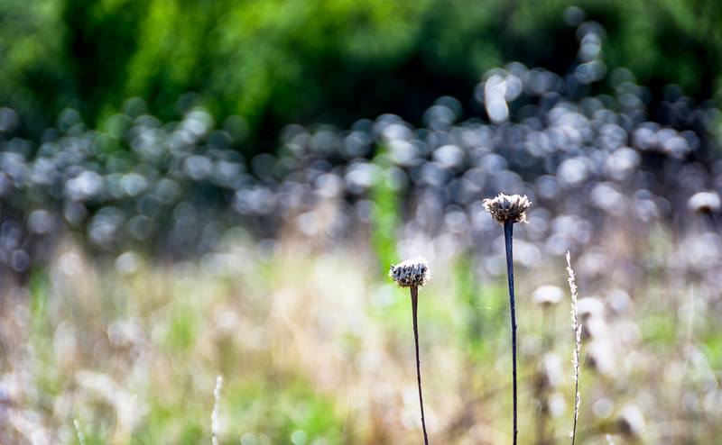 There were fields of dried flower heads that provided interesting light.