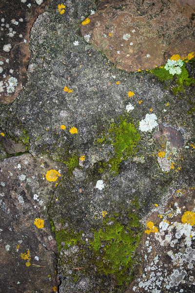 Lichen and moss have always facinated me, both in the patterns they produce and their ability to survive.