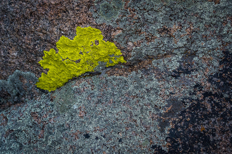 The last shot of this trip is of this crazy chartreuse lichen mixed with others of more traditional colors.  There is a little bit of everything in Rocky Mountain National Park.