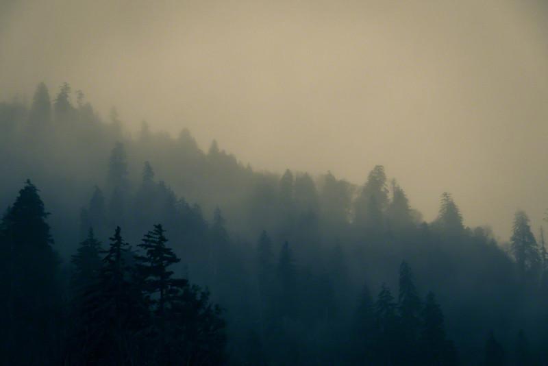 Mist among the evergreens