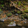 Noice the way the roots of the Philodendron intertwine with the rocks to hold on when the stream swells from heavy rains.