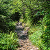The lushness of the Smokies is often a shock to visitors from the west.  It is different from Yellowstone and Yosemite.