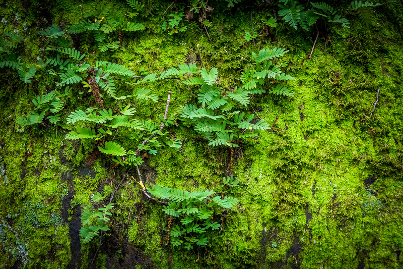In the Spring and Summer the park is lush. Here is a closeup of the ferns and moss adorning most of the huge boulders.