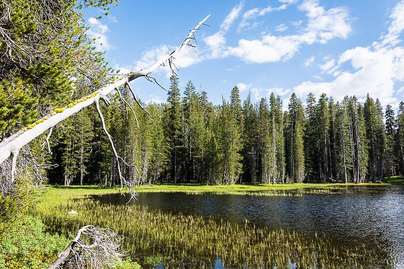 Sub Alpine lake on the way to Tuolumne Meadows