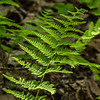 Ferns make me think peaceful thoughts.
