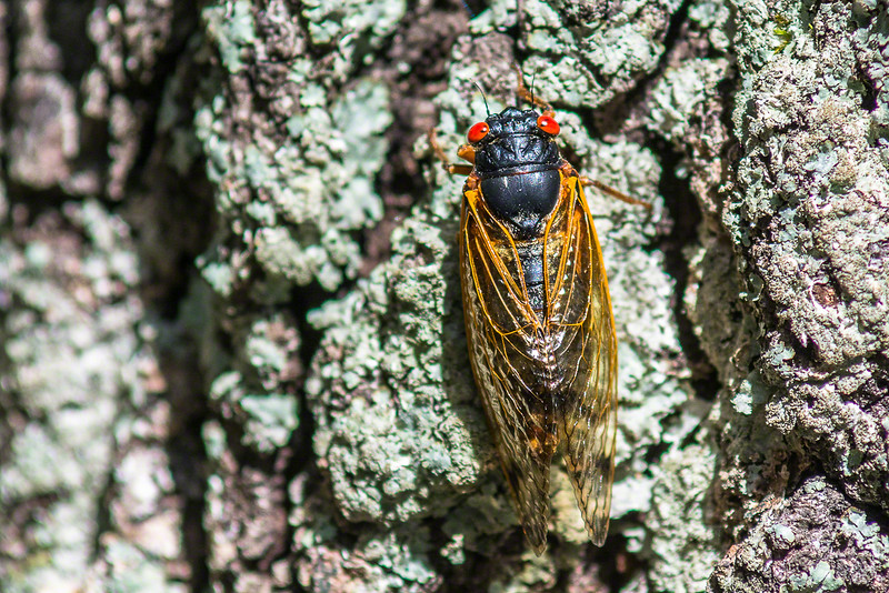 Then we moved on to a nature walk and found some of the Cicadas we had been hearing.
