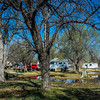 They flood certain low lying areas of the campground periodically to keep the large cottonwoods alive.