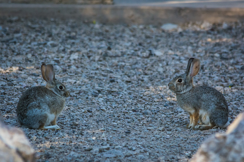 Class is in session.  To me it looks like the rabbit on the right is instructing the younger bunny on the left on the finer points of being a good bunny.