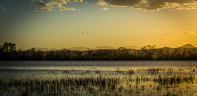 Sundown sends ducks and other birds off to roost.