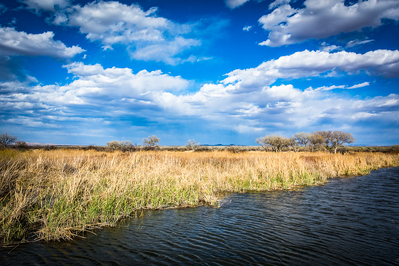 The refuge is a large patchwork of open plains, canals, the Rio Grande River, and flooded fields.