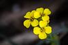 Yellow flower.  Not yet identified