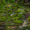 I love the moss-covered stones in this little stream.