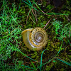 Interesting snail shell in a variety of moss