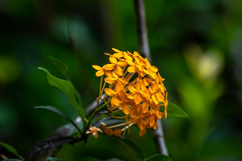 Flowers in Hawaii