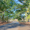 Some of the roads in the park had a cool canopy of Southern Live Oaks and Spanish Moss.