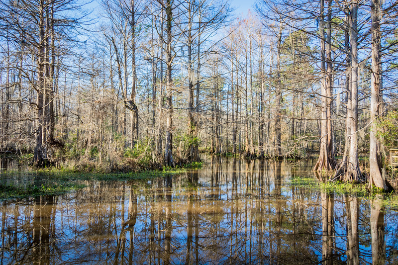 The Northshore Nature Center is a collection of trails through some of the local bayous.