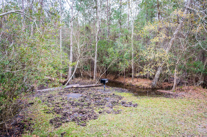 Our time was up on our original campsite so we scouted out this other promising site.  Here too there was evidence of wild pigs digging up the ground in search of acorns and other things to eat, but we were yet to see our first wild pig.