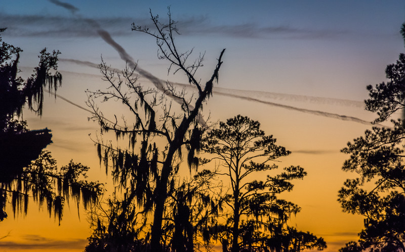 As I made my way back to the campsite I got this silhouette of the Spanish Moss so closely associated with Lousianna.