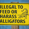 We didn't see any Alligators to feed or harass.