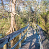 There are a few wooden bridges that connect drier land on which the trails are established.