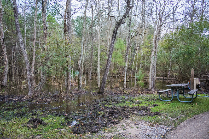 """Most people would see this campsite and say """"yuck."""" I was delighted because I immediately knew there would be wild pigs, birds, and other wildlife. I was not disappointed."""