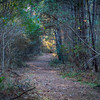 One of the trails in the Northshore Nature Center