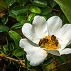 Blooms and bees in January is why we went to southern Lousiana.