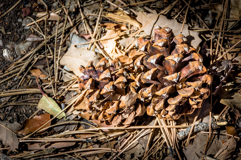 This pine cone would be out of place in the desert if it were not for the spring.  Springs provide enough water to support plants that require more water and have not adapted to desert conditions.