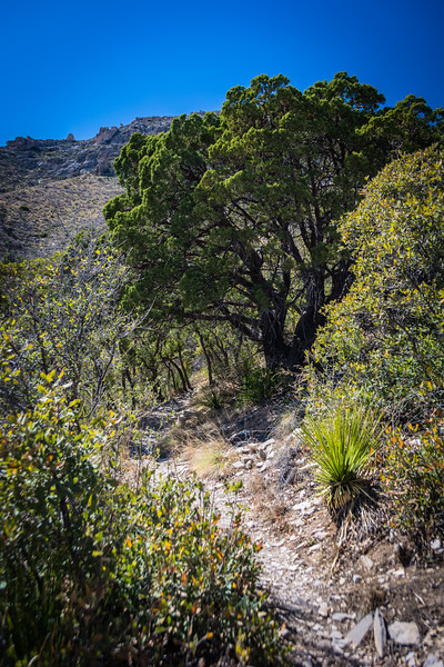 More trees indicate we are getting close.  I pause in the rare shade offered by such trees.  In the broader desert there is no shade.