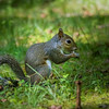 Squirrel praying near the church for a mild winter (or he could be eating something)
