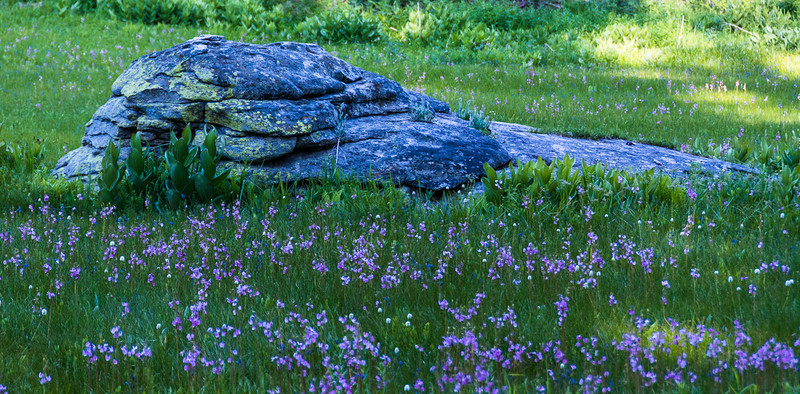I love this natural scene.  Master gardeners could not create this, only emulate it.
