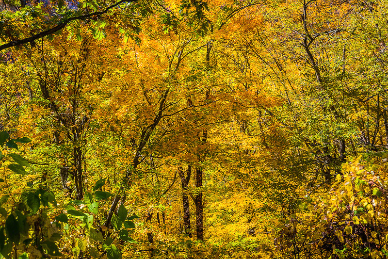 On the way to Newfound Gap I captured an example of dense foliage backlit by the sun.