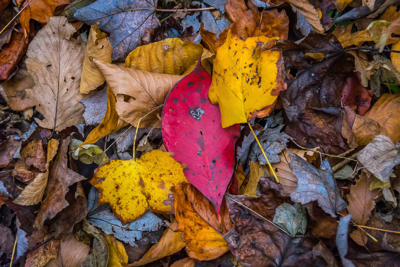 Every snapshot of the leaf-covered ground presents its own masterpiece in diversity, color and texture.