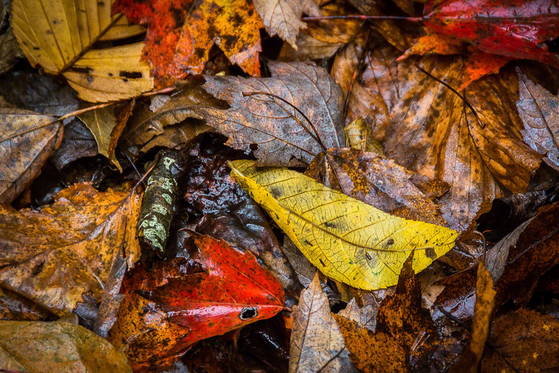 I love the colors you can just find on the ground in the Fall!  This was during a rain and the wet look is awesome.