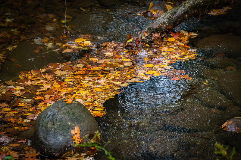 The rain in this creek is helping wash a bunch of fallen leaves into a little blanket of color.