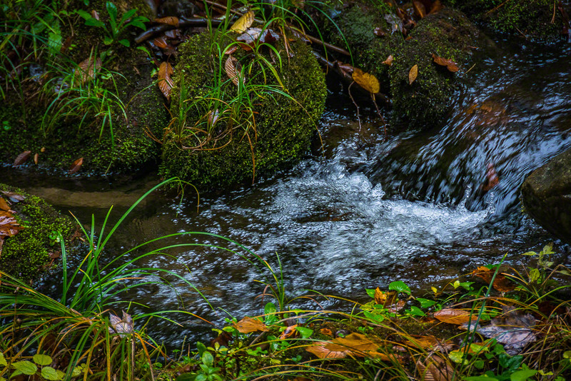 Another little stream
