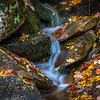 Leaves around a flowing stream.