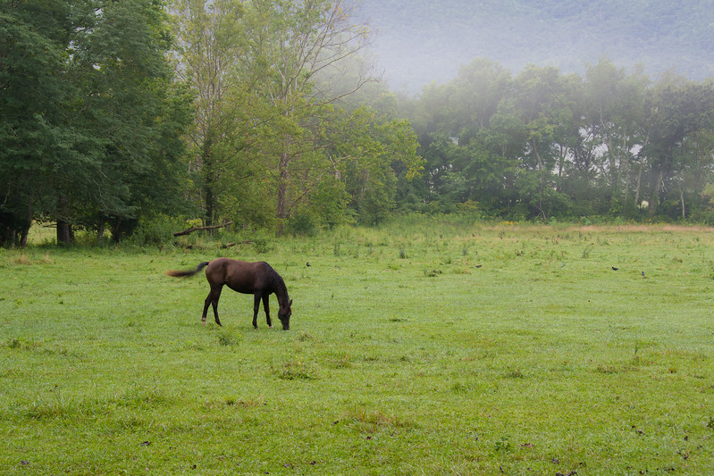 The horses they rent migrate toward the stables as daylight progresses