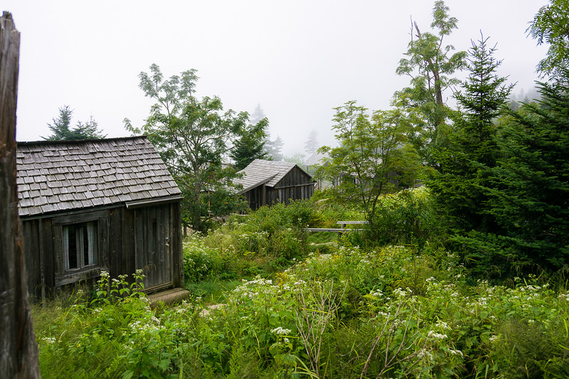 First glimpse of the cabins.  The Appalachian White Snakeroot promises butterflies.