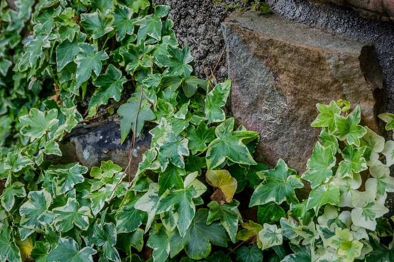 Variegated Ivy adds color and texture near the exit.