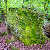 The massive boulders in the park are home to a variety of plants, especially ferns and mosses.