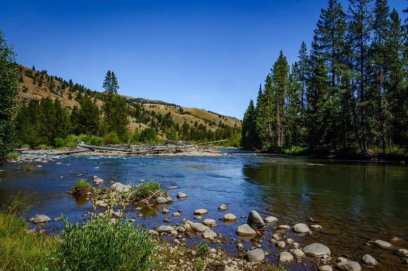 A common scene in Yellowstone
