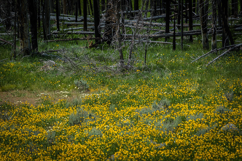 there were many open areas filled with wildflowers.