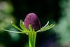 Coneflower seedhead
